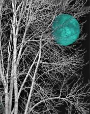 Black White Turquoise Moon Tree Home Decor Wall Art Matted Picture