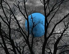 Black White Blue Moon Tree Modern Home Decor Wall Art Matted Picture