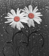Coral Gray Bathroom Wall Art Daisy Flowers Home Decor Wall Art Matted Picture