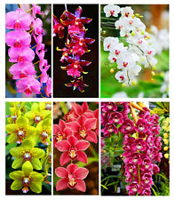 100Pcs Mix Orchid Seeds High Simulation flower Phalaenopsis Orchid Colors