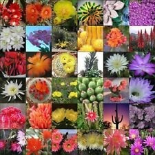 Flowering Cactus cacti variety mix 10, 50, 100, 500, 1000 seeds choice listing