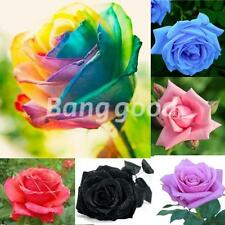 50X / 100X Flower Seed Holland Rose Seed Lover Gift  Rainbow Rare 11 Colors New