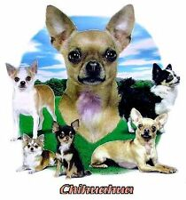CHIHUAHUA DOG  T-SHIRT IN COLORS WS711