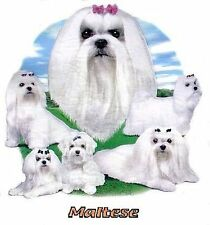 MALTESE DOG  T-SHIRT IN COLORS WS718