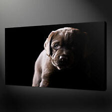 LAB PUPPY QUALITY PREMIUM CANVAS PRINT PICTURE WALL ART DESIGN FREE UK P&P