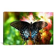 iCanvas Swallowtail Butterfly  by Unknown Artist Canvas Print Wall Art