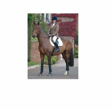 SALE SHIRES LADIES HUNTINGDON SHOW JACKET tailored classic tweed showing riding