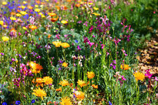 Wildflower Mix:North American wildflower mix Fresh Seed  FREE Shipping!
