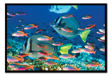 Yellow Tailed Surgeonfish Tropical Marine Fish Magnetic Notice Board Inc Magnets