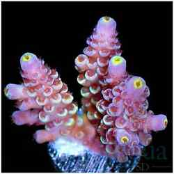 Miracle Gro Plant Fertilizer Indoor Plant Food48 Spikes $16.78