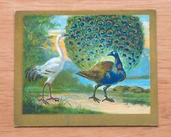 1910 Turkish Trophies - T57 Fable Series - The Peacock & The Crane - ExMt