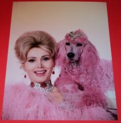 ZSA ZSA GABOR WITH PINK POODLE 8 x 10 COLOR PHOTO $13.99