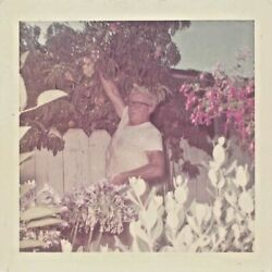 WHAT'S YOURS IS MINE - MAN TAKES NEIGHBORS FRUIT OVER FENCE TREE VTG PHOTO 263 $5.99