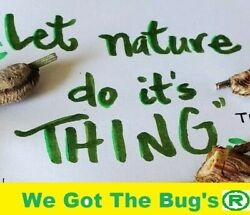 🌟 5 Praying Mantis Eggs 🌟 Let Mother Nature Do it#x27;s Thing 🌟5 Eggs in each ba $16.99