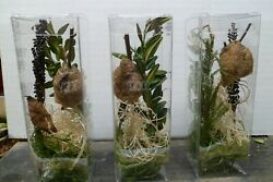 1 Praying Mantis Eggs Each 6 x 2 x 2 Habitat Is a One of a Kind. crystal clear $19.99