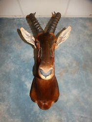 Brand new African Topi Antelope Trophy MountHornsTaxidermy Home Cabin Decor