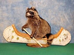 Cool Brand new Raccoon Mount in a Canoe Taxidermy Novelty Home Cabin Decor