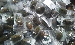 100 Love Buds Bulk Pack 100 Lot Made to Order Decorative Faux Cannabis Keychains