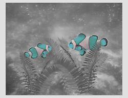 Teal Gray White Home Decor Fish Art Photo Print Wall Bedroom Bathroom Picture $19.75