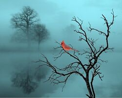 Red Black Teal Cardinal Bird Home Decor Wall Art Photo Print Bedroom Picture $19.75