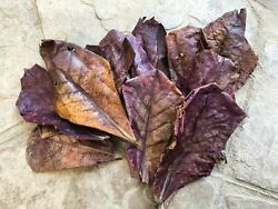 102050pcs NATURAL Catappa Indian Almond Leaves for shrimp betta discus cichlid $6.99