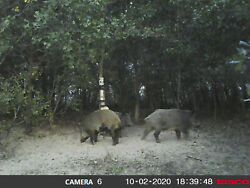 Texas Hog hunting for 2 days 1 night 110 miles south west of Fort Worth $200.00