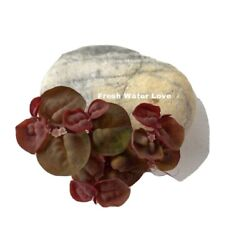 10 Pcs Red Root Floaters Super Red Live Aquarium Floating Plant 2 Free Plants $17.00