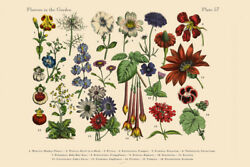Exotic Flowers of the Garden Victorian Botanical Illustration Poster 18x12 $9.99
