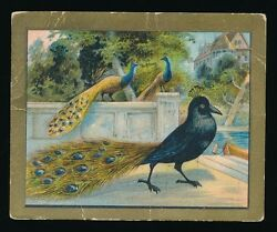 1910 T57 Turkish Trophies FABLE SERIES (1-50) -The Vain Jackdaw (Fac 30)