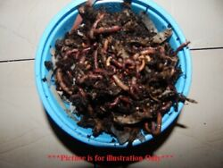 🐛 Red Wiggler Composting and Bait Worms🐛Great For Gardens and Plants🐛 $26.89