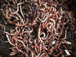 European Nightcrawlers Coco Coir and Purina Worm Chow- Free Shipping $16.95