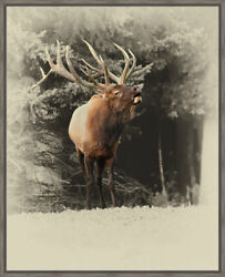 Ashton Wall Décor LLC Wildlife and Lodge 'Bugling Elk' Framed Photographic Print