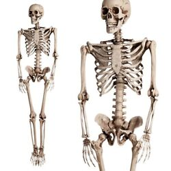 5.6ft Halloween Poseable Human Skeleton Full Life Size Props Party Decoration $50.98