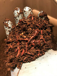 1 4 pound about 250 Red Wiggler composting worms Eisenia fetida $14.50