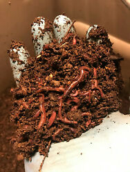 1 2 pound about 500 Red Wiggler composting worms Eisenia fetida $23.99
