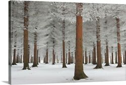 Solid-Faced Canvas Print Wall Art entitled Magical Forest
