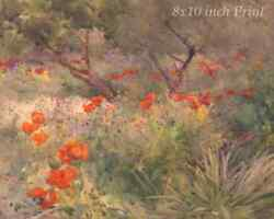 Oriental Poppies by Mildred Anne Butler - Red Flowers 8x10 Print Picture 1819