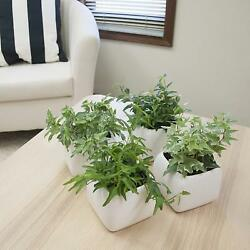 Set of 4 Exotic Angel Ivy Pothos Plant Home Office Ornamental Flower Easy Grow