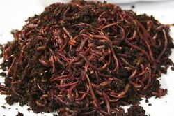 500 Count Red Composting Worm Mix $49.99
