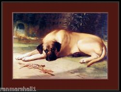 English Picture Print Bullmastiff Dog Dogs Puppy Puppies Vintage Poster Art $7.99