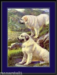 English Print Great Pyrenees Dog Dogs Puppy Puppies Art Vintage Poster $7.99