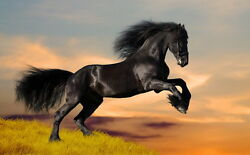 Home art wall Decor for living room Dark horse Oil painting Printed on canvas $7.77