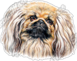 Cute Pekingese Dog Dogs Pet Animal Breed Car Bumper Vinyl Sticker Decal 5quot;X4quot; $3.50