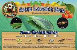 Green Lacewing Eggs on Hanging Card 1000 Count $20.24
