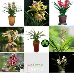 Live Orchid Plants Easy Care Large Flowers Orchids Air Purifying Live Houseplant $27.25