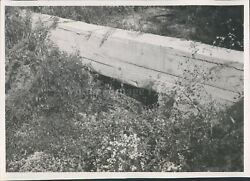 1963 Photo Eastlake Sewer Cement Wall Trees Brush Leaves Grass Crawlspace $12.99