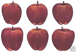 APPLE DECALS WALL DECORATIONS WALL ART DECOR STICKERS TATOUAGE $9.50