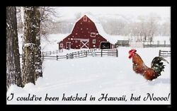 Hatched In Hawaii sign plaque gift rooster chicken snow farm wall decor $14.99