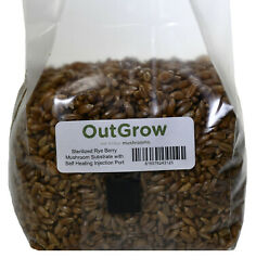 Sterilized Rye Berry Mushroom Substrate With Self Healing Injection Port $6.95