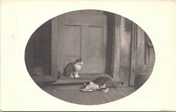 RPPC Two Pet Cats Sitting at Doorstep Drinking from Saucer early 1900s $7.69
